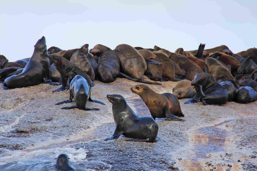 cape-town-seal-island