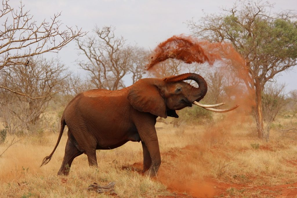 african-elephant-addo