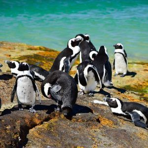 penguins-boulders-beach