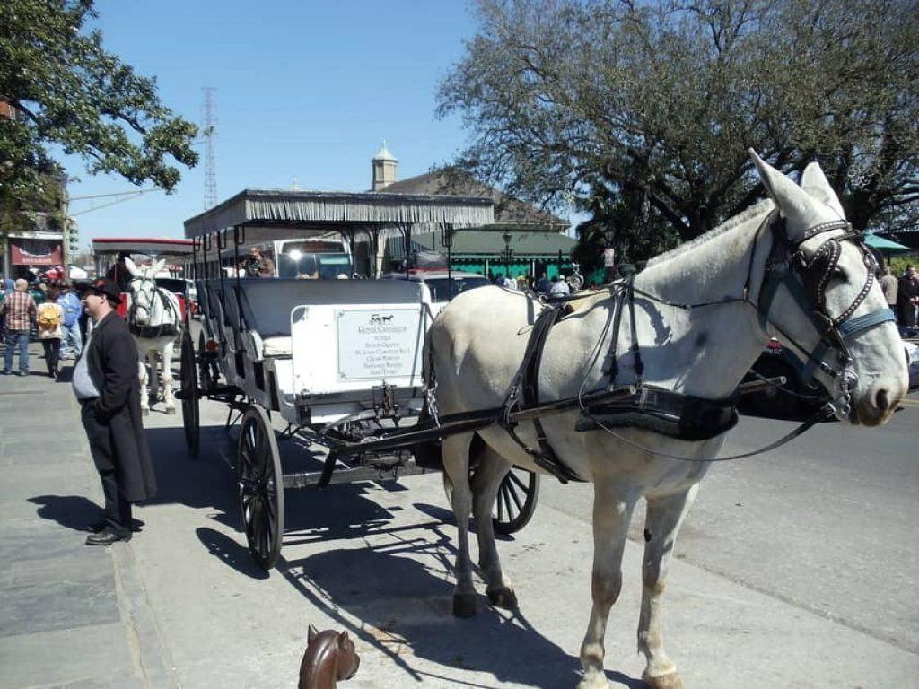 French Quarter carriage tour
