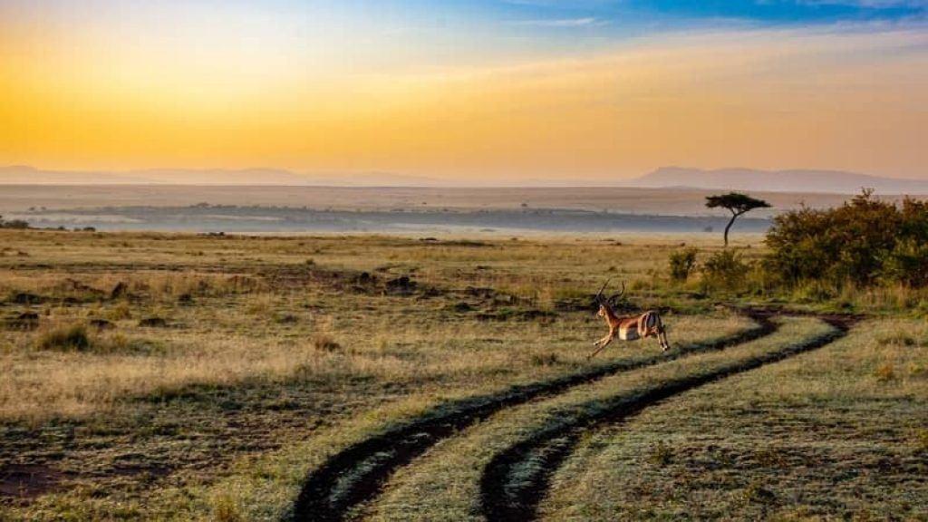 buck jumping through open plains