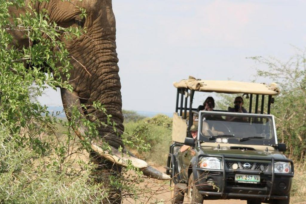 full day kruger safari