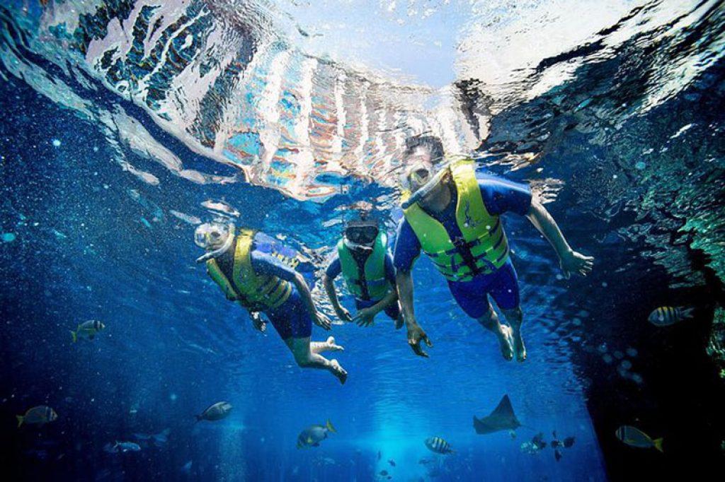 snorkeling in Dubai water park aquarium