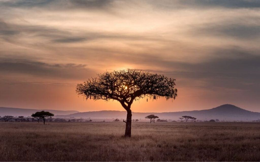 tree-south-africa