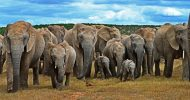 6-Day Garden Route and Addo Safari
