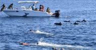 Black River Swim with Dolphins Speedboat Tour