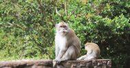 Mauritius: Black River Gorges National Park 3-Hour Hike