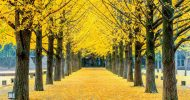Nami Island with Petite France and Garden of Morning Calm