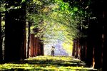 Private Full Day Tour to Nami Island and Free style...
